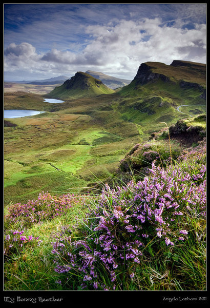 Photograph My Bonnie Heather by Angie Latham on 500px