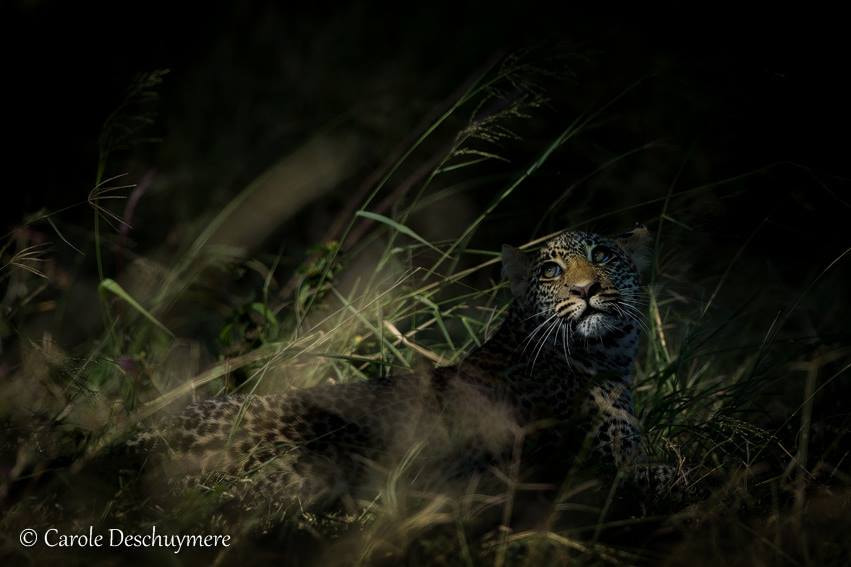 Photograph Elusive Cat by Deschuymere Carole on 500px