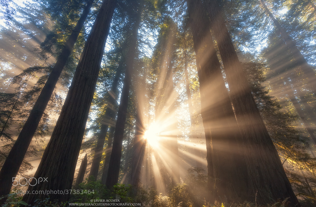 Photograph Beams of Light by Javier Acosta on 500px