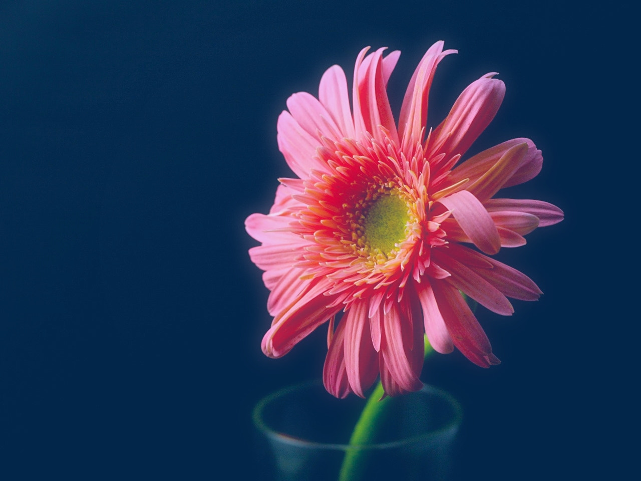 Photograph Pastel Pink by Vey Telmo on 500px