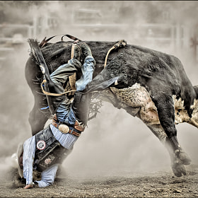 Involuntary Dismount by peter j (peterj)) on 500px.com