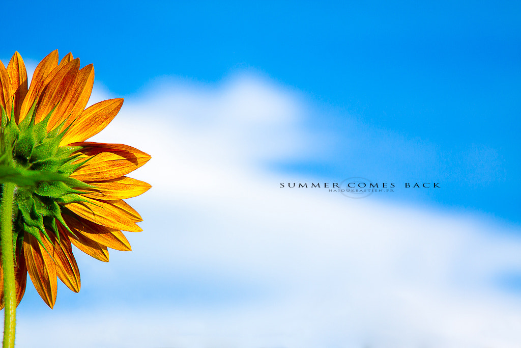 Photograph Summer comes back by Bastien HAJDUK on 500px