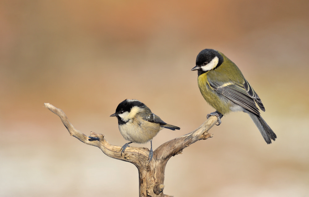 Photograph Little and Large by Geoffrey Baker on 500px