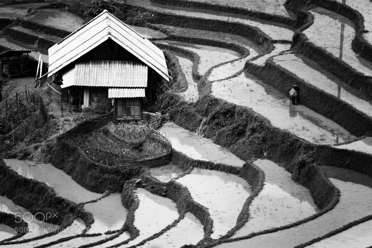 Photograph rice farm. by Julia Su on 500px