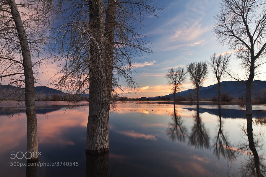 Photograph Farmers Pond Reflection by Nicklaus Johnson on 500px