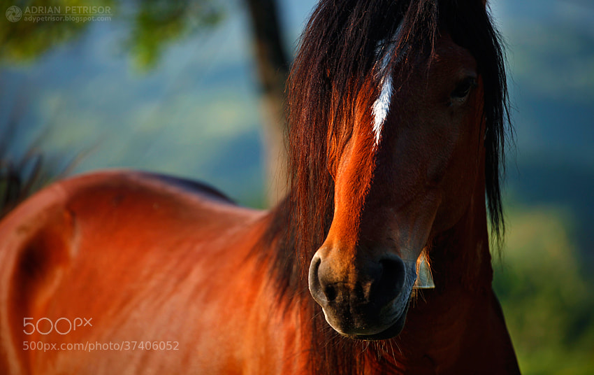 Photograph Red beauty by Adrian Petrisor on 500px