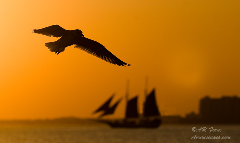 Photograph Sunset Time !!! by Alfred Forns on 500px