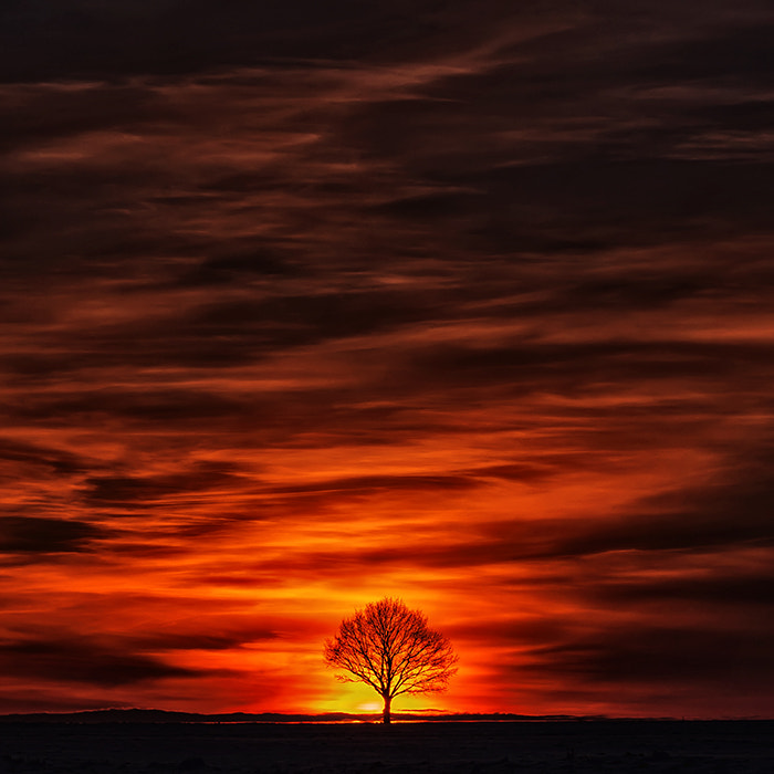Photograph flaming tree by Dgs  on 500px