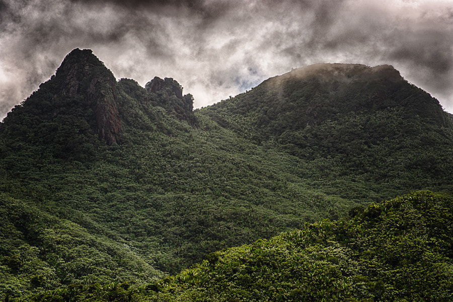 El Yunque National Park, the only tropical rainforest in the US national park system.