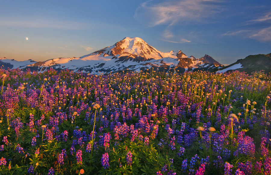 Photograph Bathed in the Sunset by Trevor Anderson on 500px