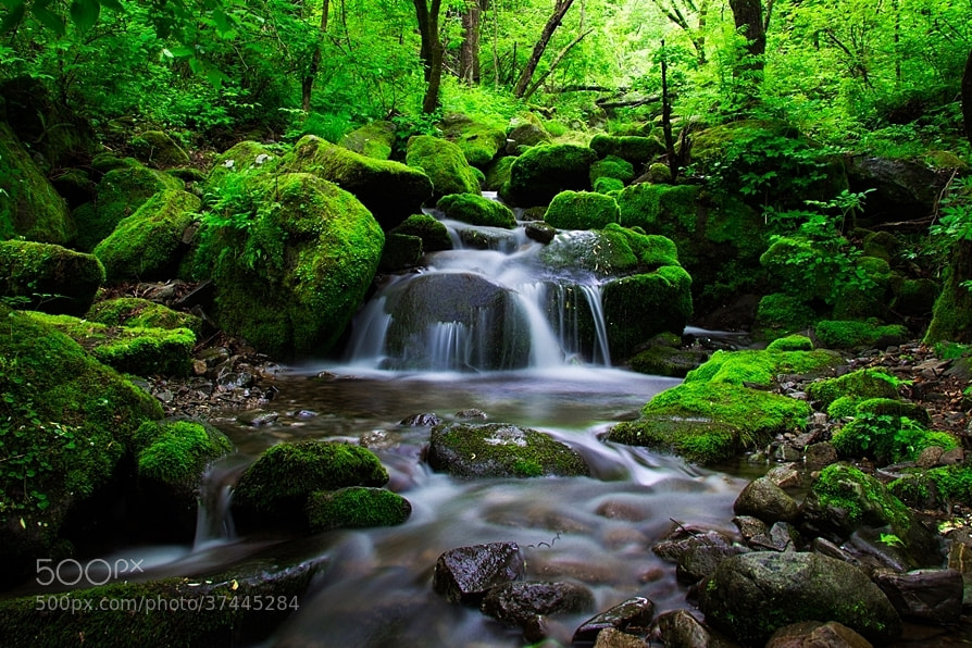 Photograph moss valley by Oh_heungkook on 500px