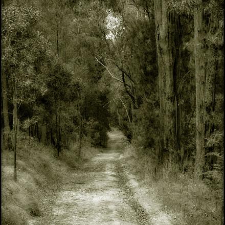 Bush Lane