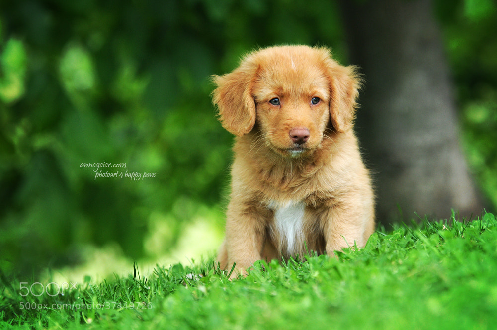 Photograph more cute - impossible ;) by Anne Geier on 500px