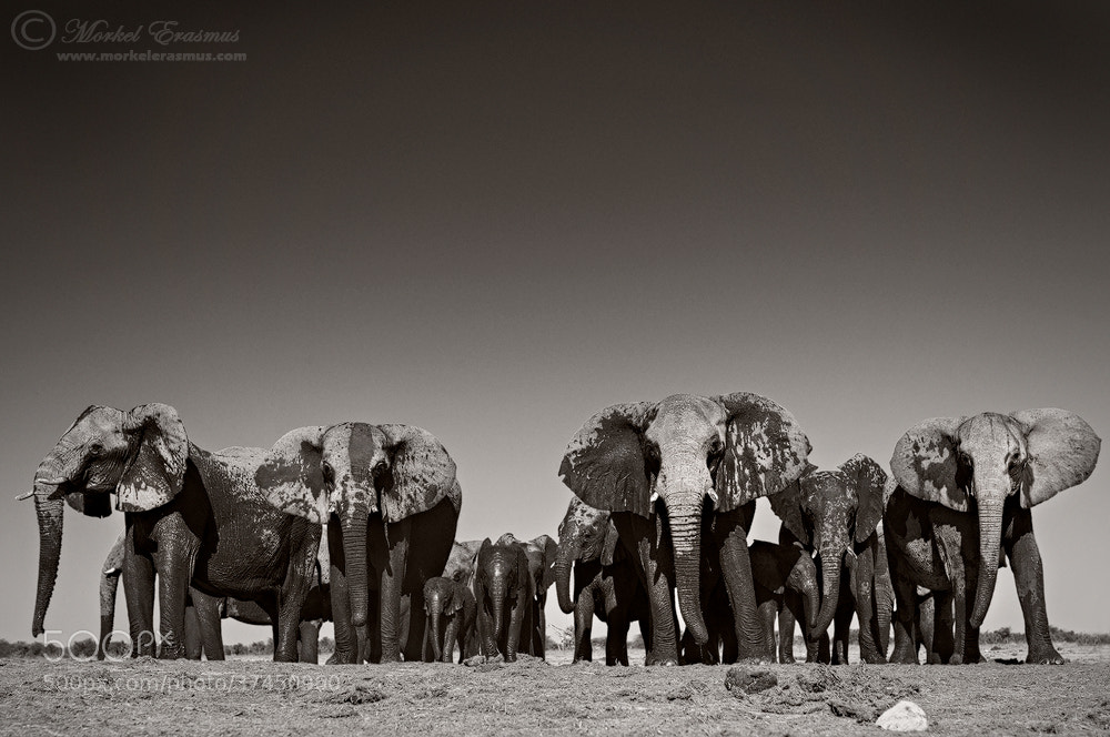 Photograph The Lineup by Morkel Erasmus on 500px