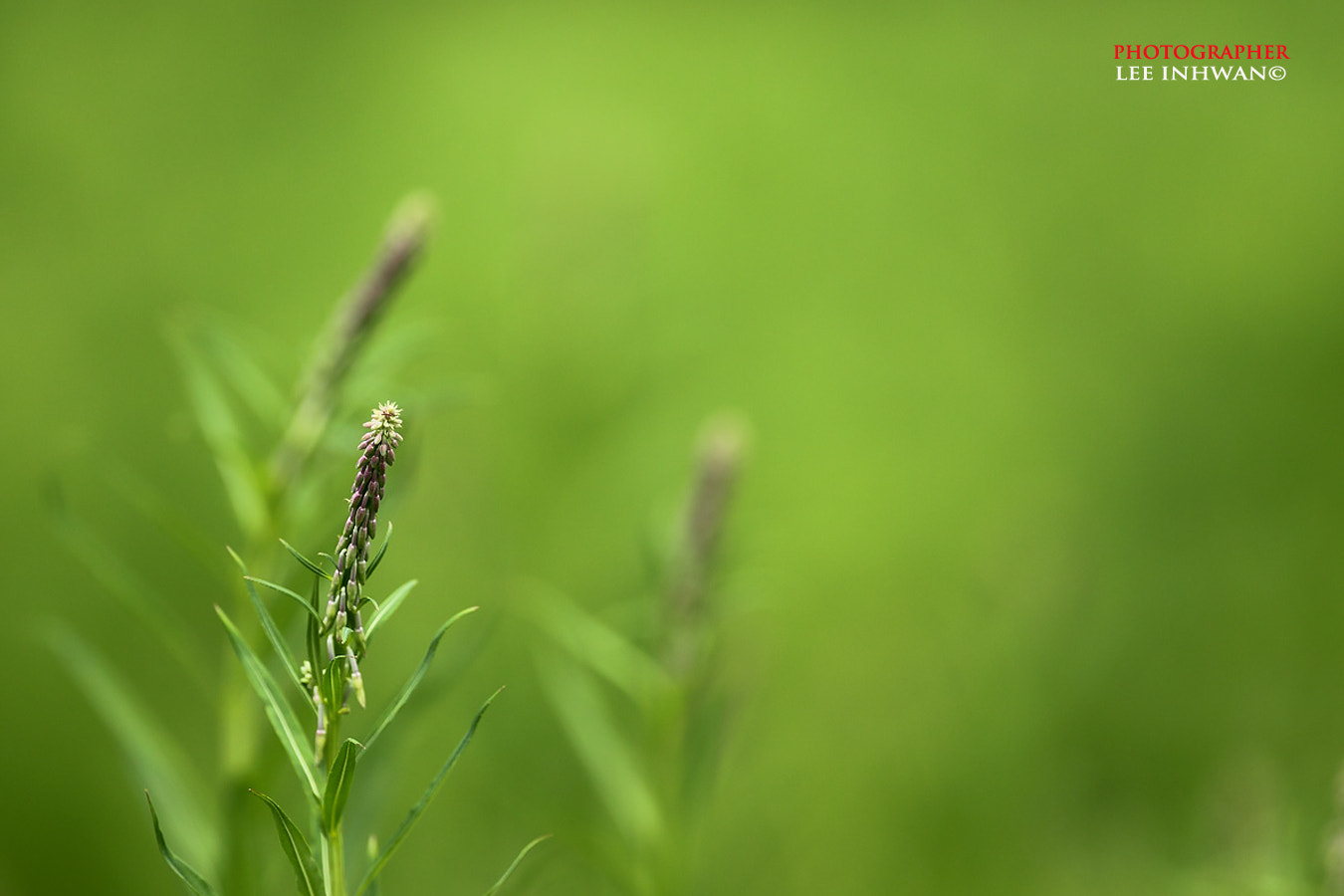 Photograph Young bud by LEE INHWAN on 500px