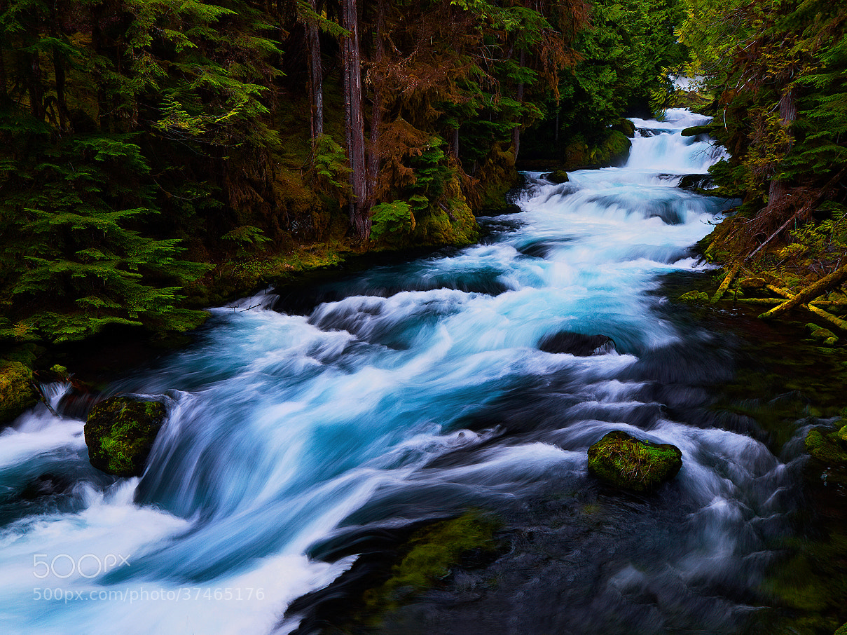 Photograph McKenzie River by Christina Angquico on 500px