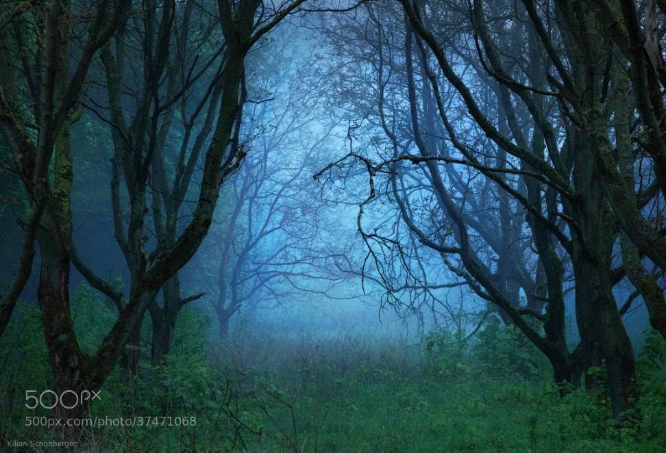 Photograph Solitude by Kilian Schönberger on 500px