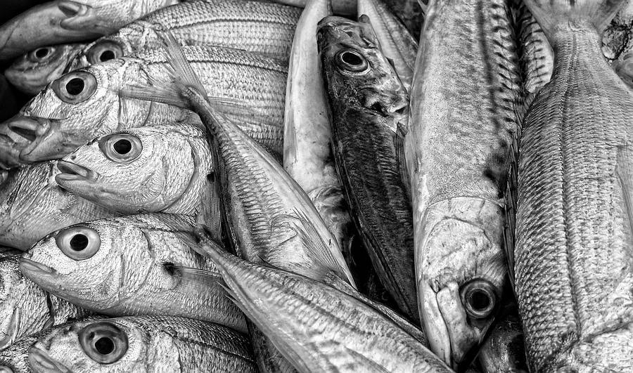 Photograph Catch of the Day by Piet Osefius on 500px