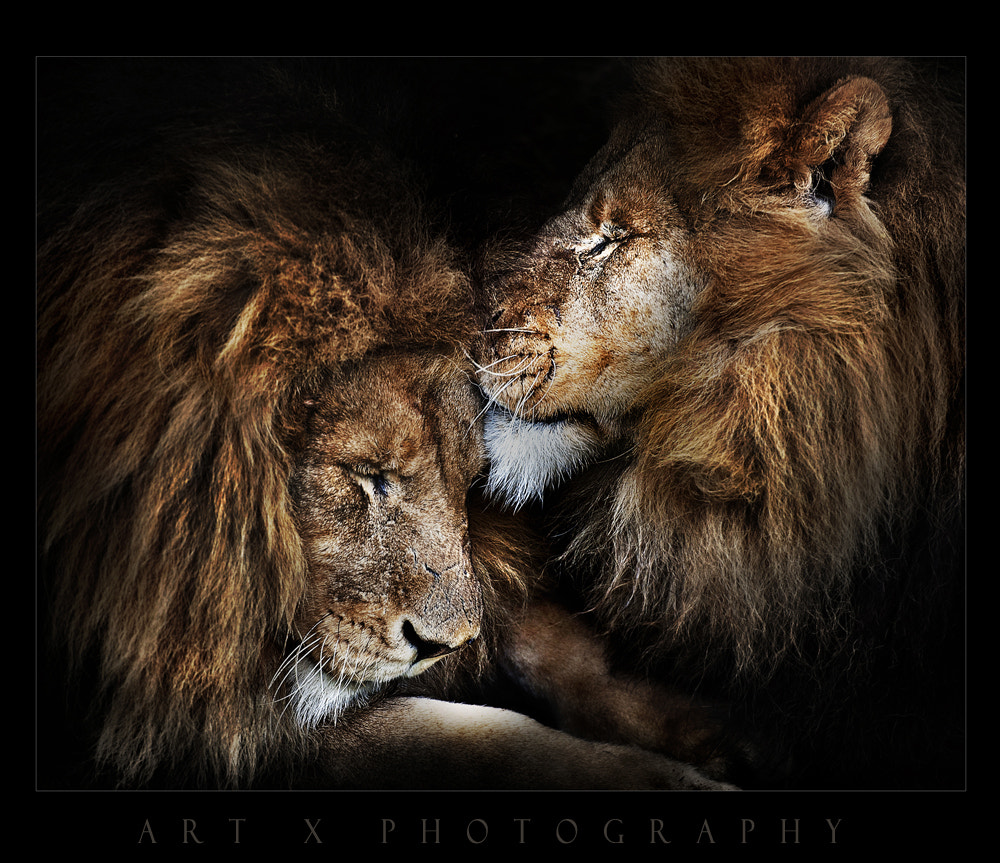Photograph Brothers by Art X  on 500px