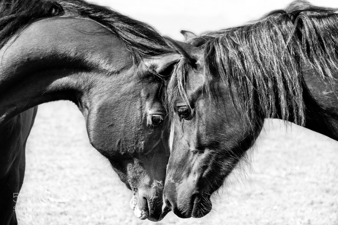 Photograph Sultan and Tilly meet by Keri Beal on 500px