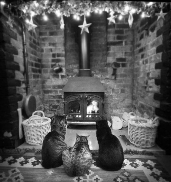 Photograph Fireside Haven by Angie Latham on 500px