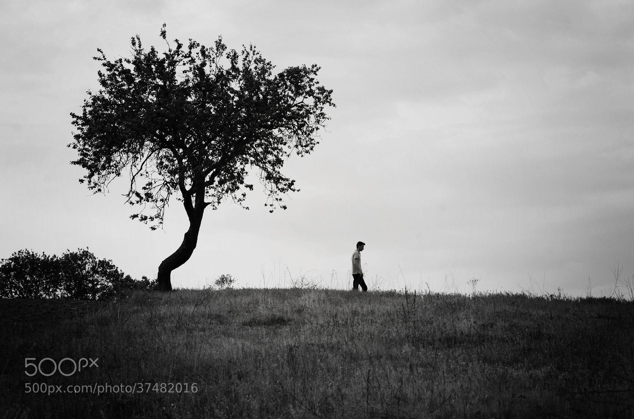 Photograph Walking alone by Adrian Limani on 500px
