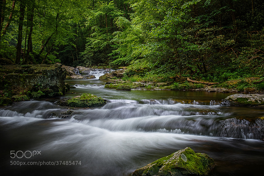 Spring rains swell the Little River in the Great Smoky Mountains National Park.