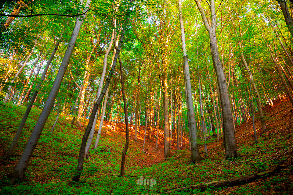 Photograph The woods are lovely... by David Hera on 500px