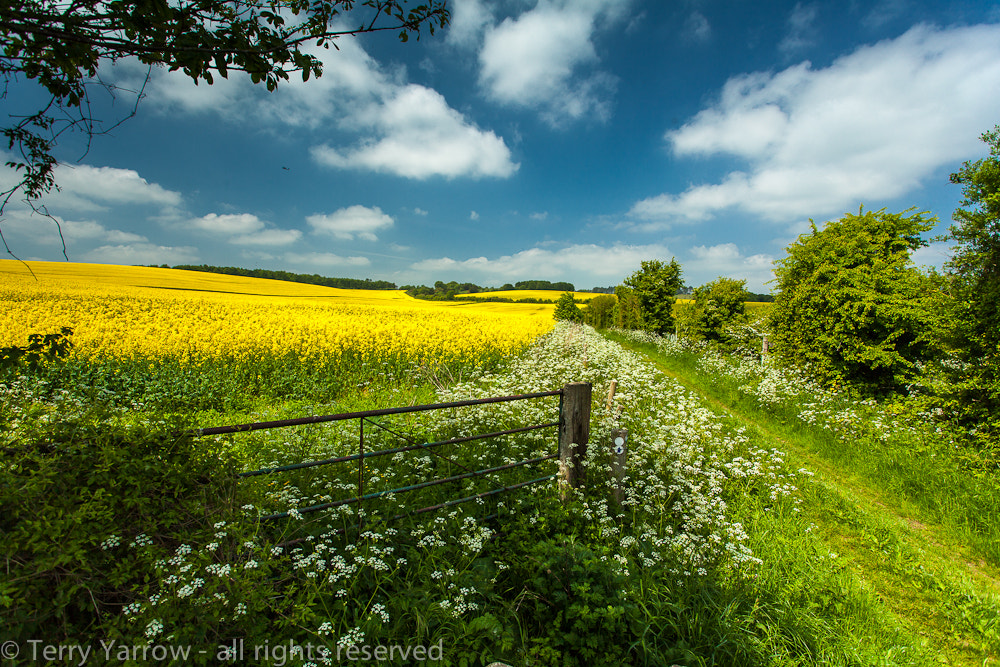 Photograph Beside the Rape Field by Terry Yarrow on 500px