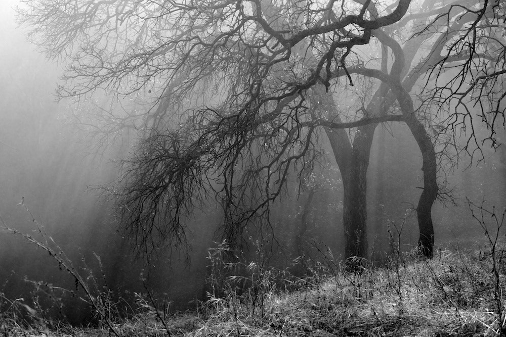 Photograph BW 1 by Andrew Garner on 500px