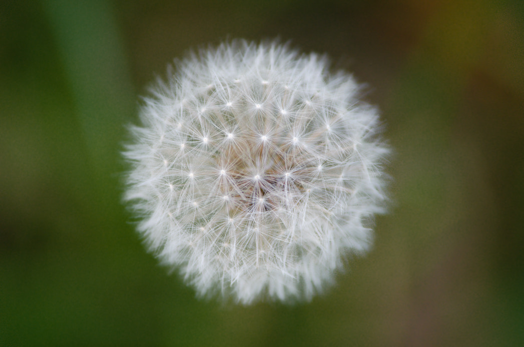 Photograph Blowball (°194) by Star Lee on 500px