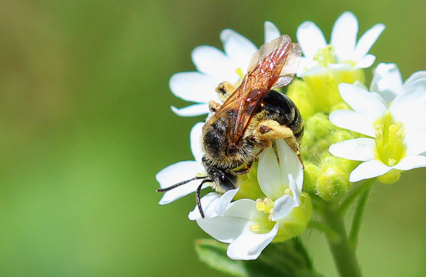Photograph A Pollinating Affair by Tim Krause on 500px