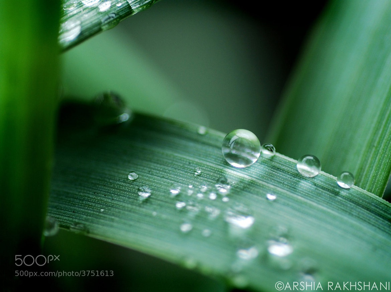 Photograph Water drops by Arshia Rakhshani on 500px