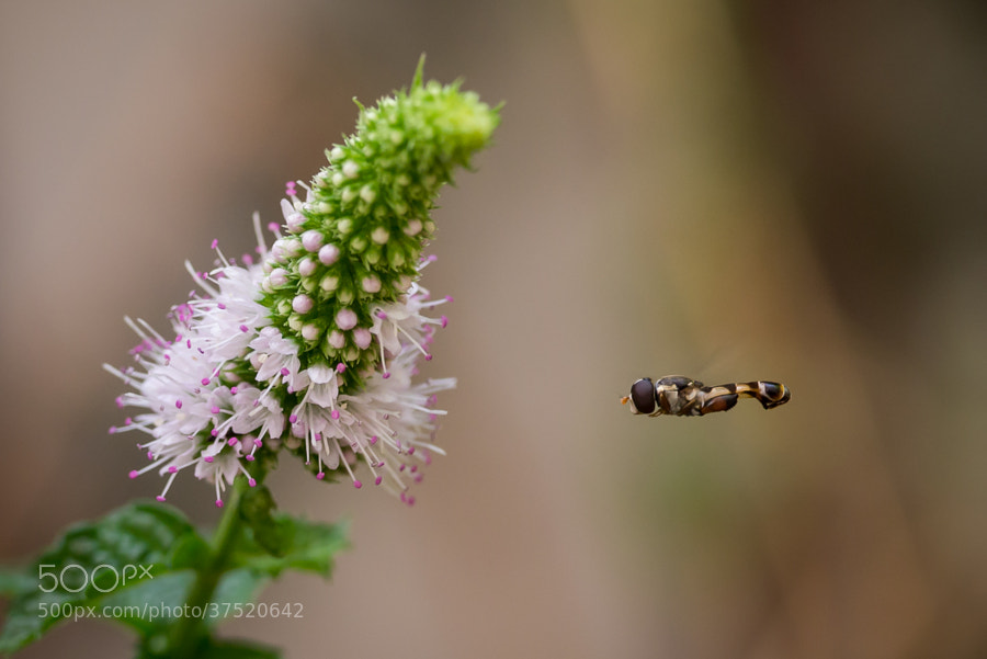 Photograph </p> <p>Nano DOF Fight by Amine Fassi on 500px