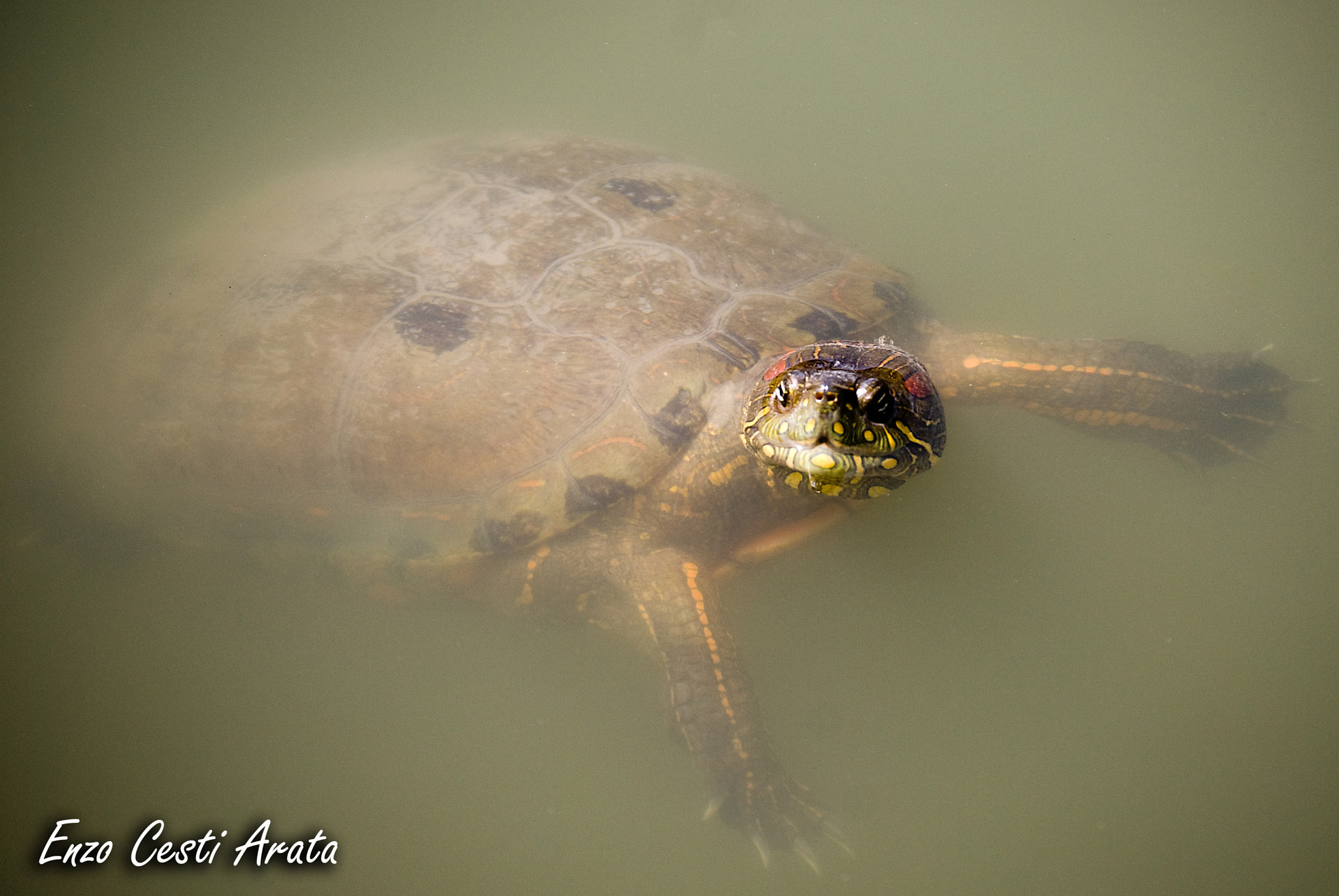 Photograph Tortuga by Enzo Cesti on 500px