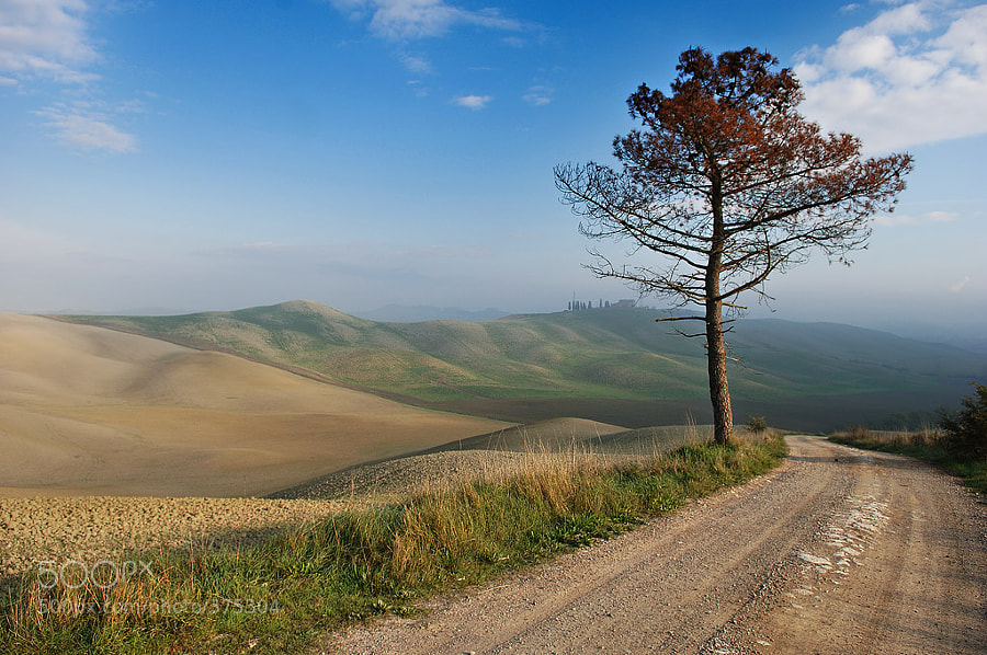 Photograph Lonely tree by Jure Kravanja on 500px