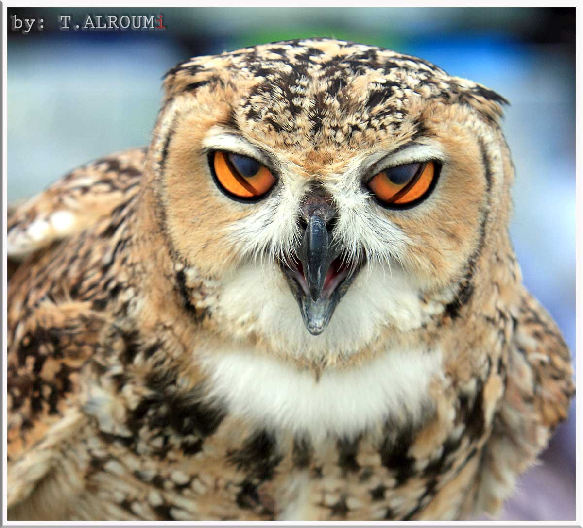 Photograph when the owl Blinking ;) by Tasneem ALRoumi on 500px