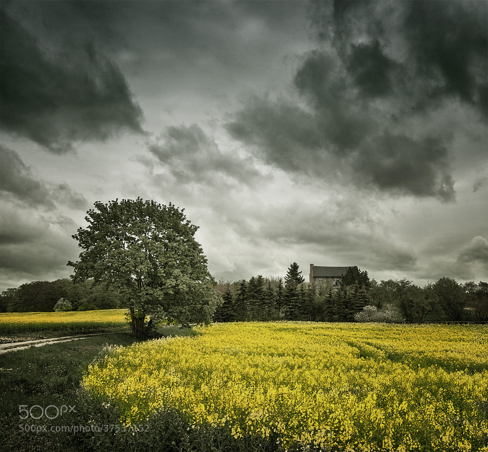 Photograph Rapsfeld - rape field by Martina Roberts on 500px