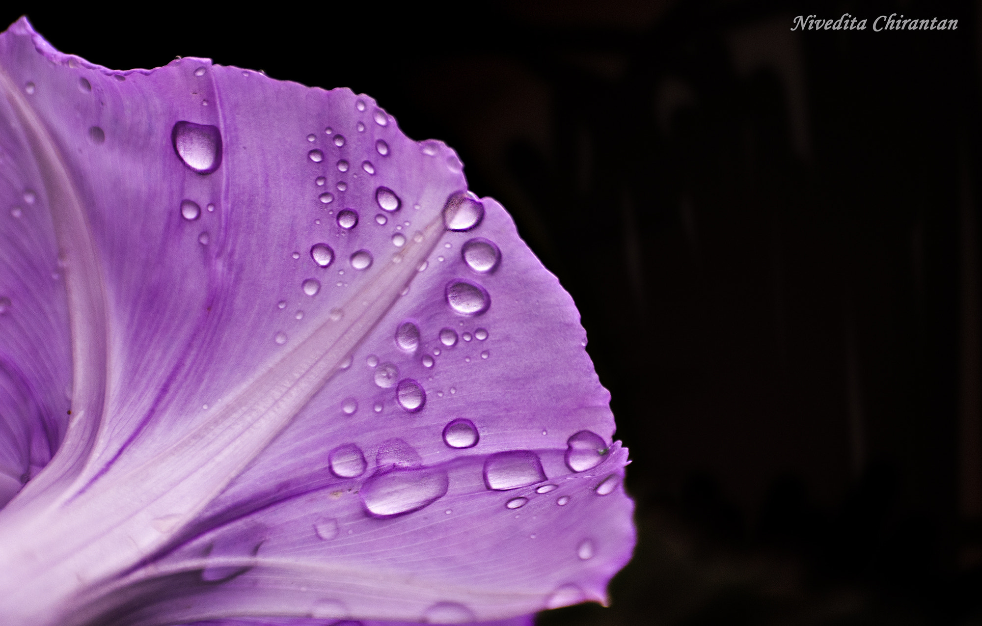 Photograph colour and drops by Nivedita Chirantan on 500px
