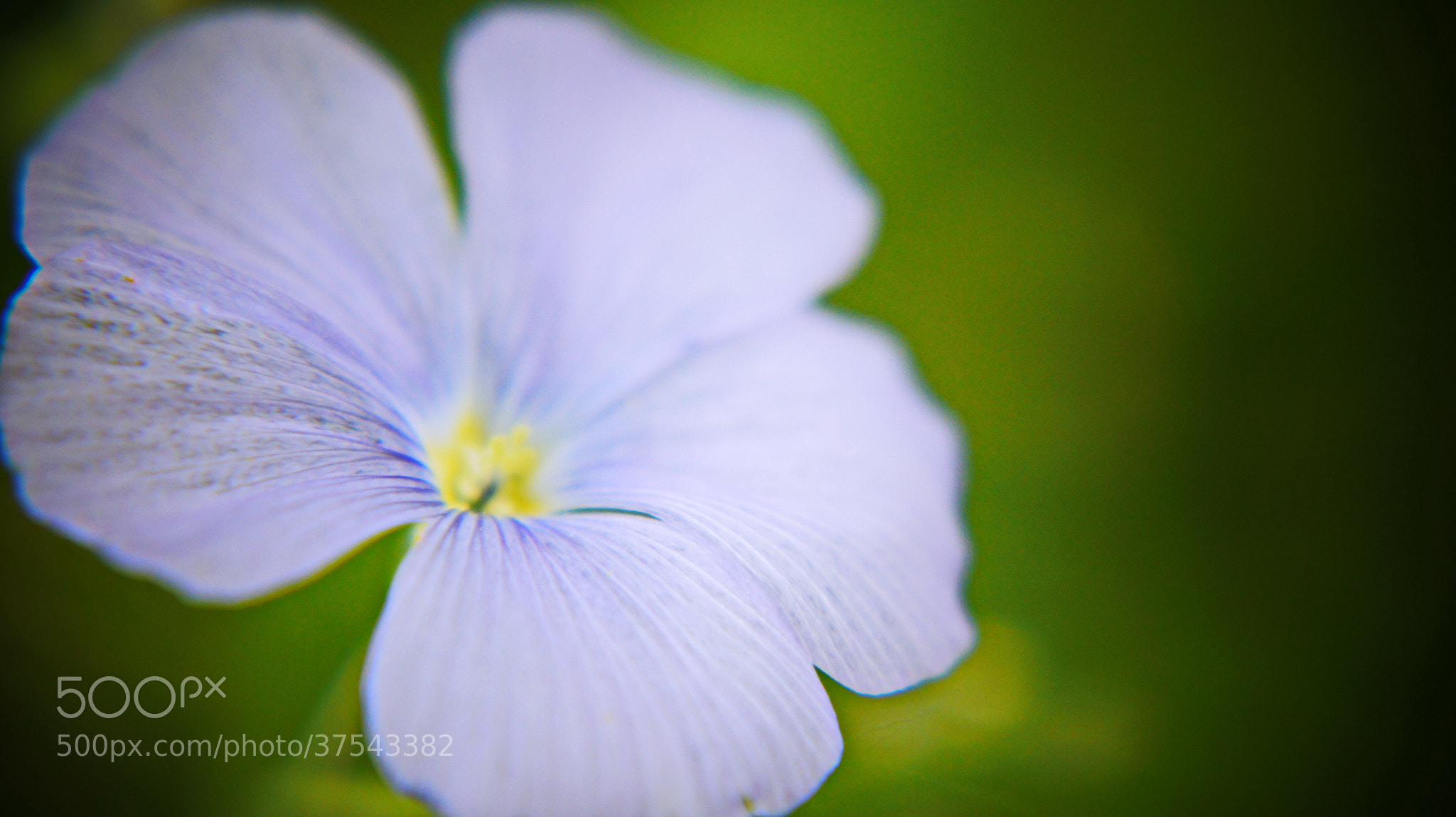Photograph Tenderness by Hiwa  on 500px