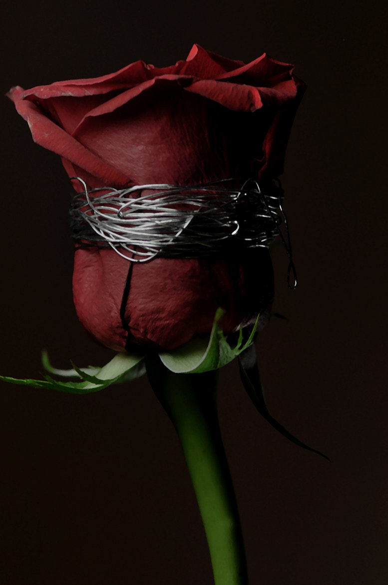 Photograph Restricted Love by Dalal_ALWazzan on 500px