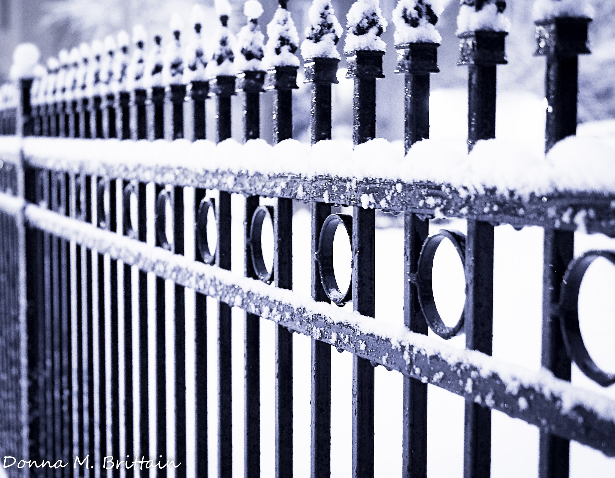 Photograph Neighbours Fence by Donna Brittain on 500px