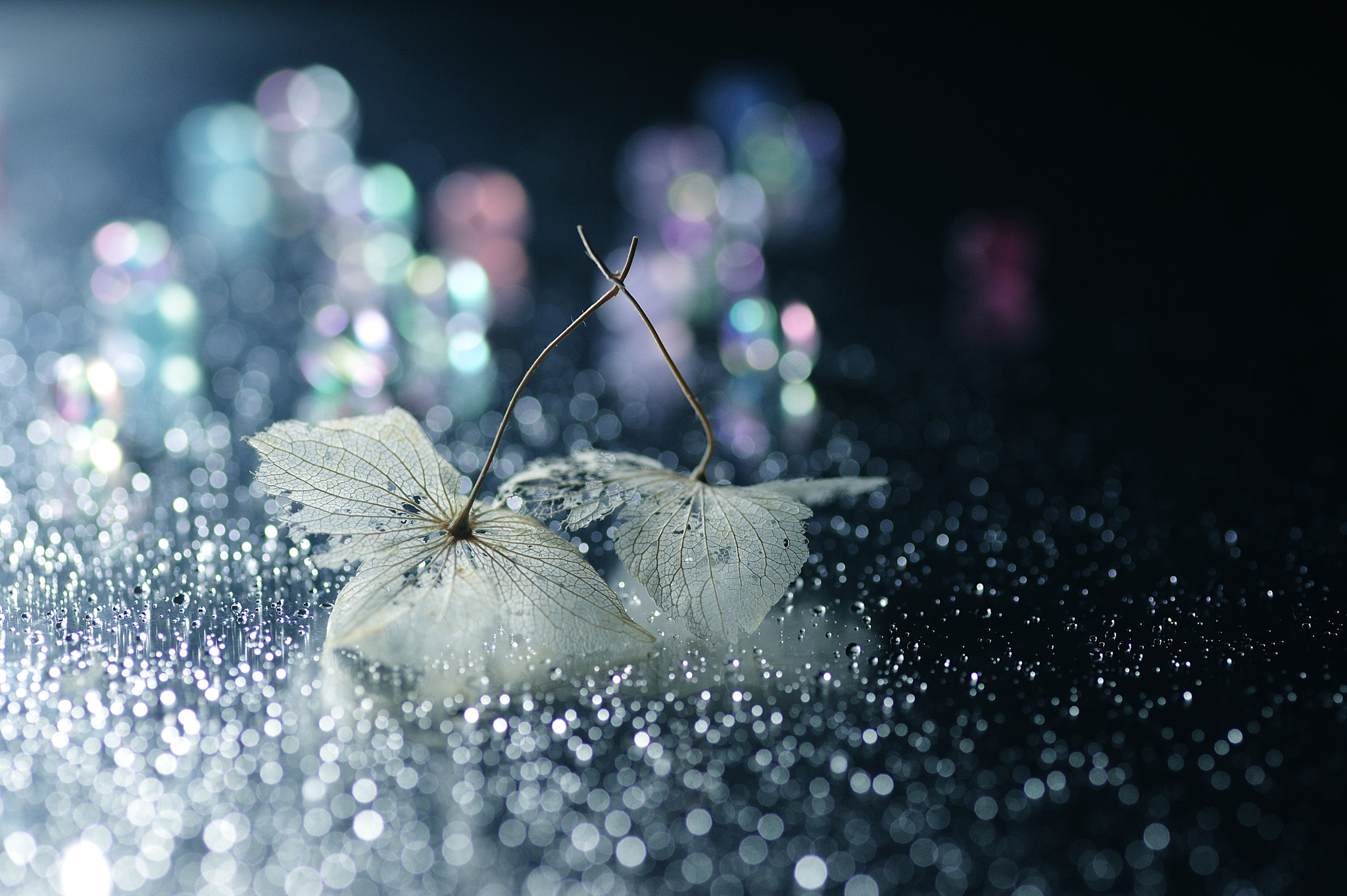 Photograph Cheek to Cheek by Lafugue Logos   on 500px