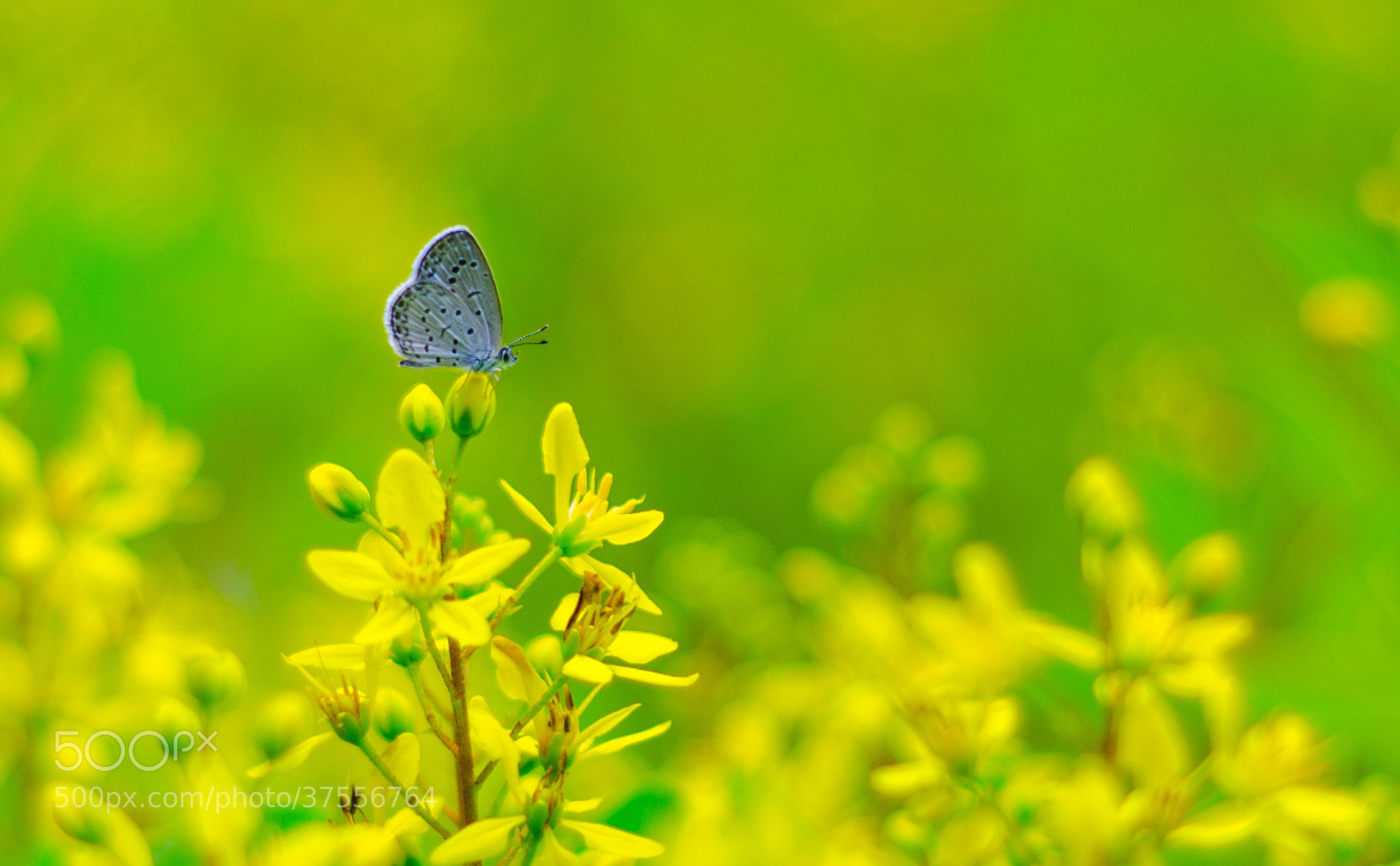Photograph we love green and flowers by Zachary Voo on 500px