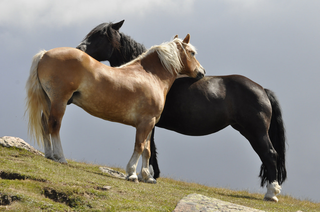 Photograph horses in love by Thomas Stuffer on 500px