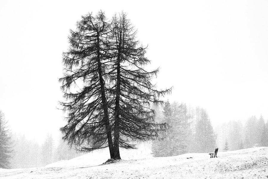 Silence by Alexei Mikhailov (amikhailov)) on 500px.com