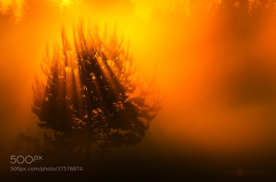 Photograph Orange Sunrays by Joni Niemelä on 500px