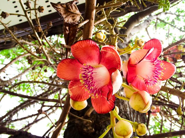 Photograph Sara by Narongrit Phooprang on 500px