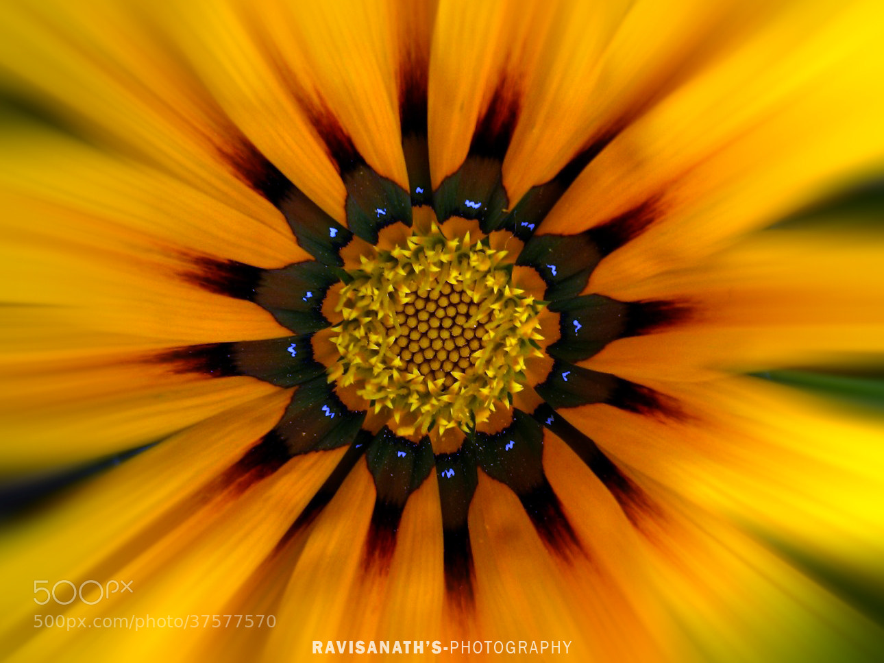 Photograph sunFLOWer>F:)ce by Ravisanath  on 500px