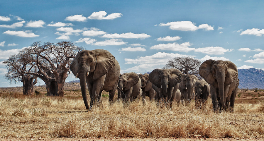 Photograph In the path of giants by Scott Hanson on 500px